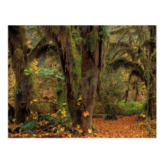 North America; USA; Washington, Moss-Covered Postcard