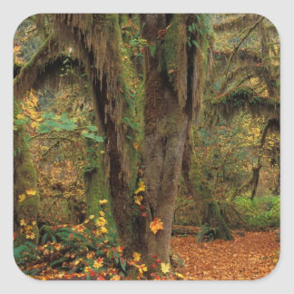 North America; USA; Washington, Moss-Covered Square Sticker