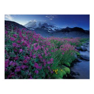 North America, USA, Washington, Mt. Rainier 6 Postcard