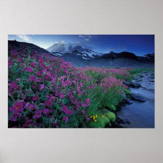 North America, USA, Washington, Mt. Rainier 6 Poster