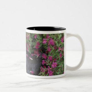 North America, USA, Washington, Mt. Rainier Two-Tone Coffee Mug
