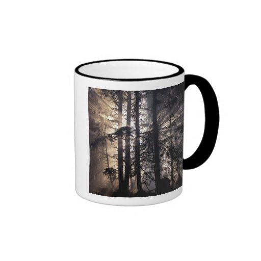 North America, USA, Washington, Olympic NF, Mug