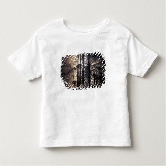 North America, USA, Washington, Olympic NF, T-shirt