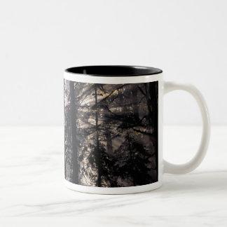 North America, USA, Washington, Olympic NF, Two-Tone Coffee Mug