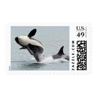 North America, USA, Washington, San Juan Stamp