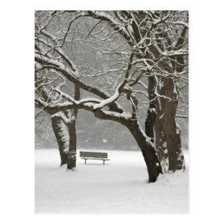 North America, USA, Washington, Seattle, Snow 2 Postcard