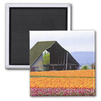 North America, USA, Washington, Skagit Valley. 2 2 Inch Square Magnet