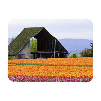 North America, USA, Washington, Skagit Valley. 2 Rectangular Photo Magnet