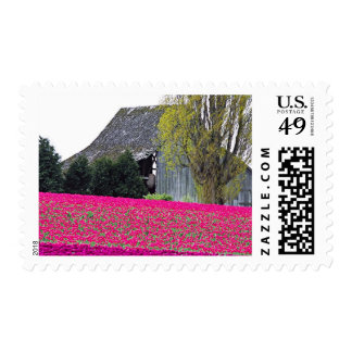 North America, USA, Washington, Skagit Valley. Postage