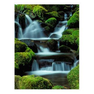 North America; USA; Washington, Sol Duc Cascade Postcard