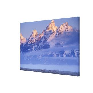 North America, USA, Wyoming, Grand Teton NP, Canvas Print