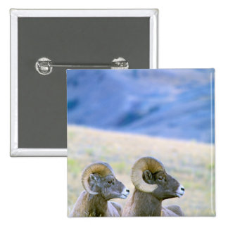 North America USA Wyoming Yellowstone Pinback Button
