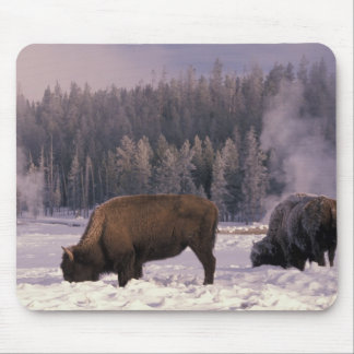 North America, USA, Wyoming, Yellowstone NP, Mouse Pad
