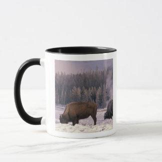 North America, USA, Wyoming, Yellowstone NP, Mug