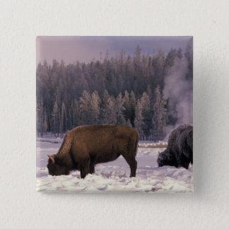 North America, USA, Wyoming, Yellowstone NP, Pinback Button