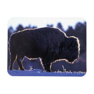 North America, Wyoming, Yellowstone National Rectangular Photo Magnet