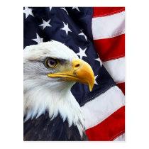 North American Bald Eagle on American flag Postcard