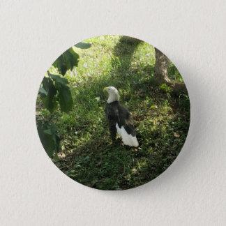 .North American Bald Eagle Pinback Button