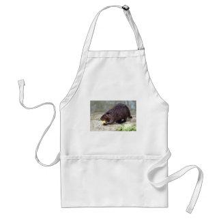 North American Beaver eating apple Adult Apron