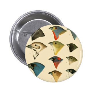 North American Birds Pin