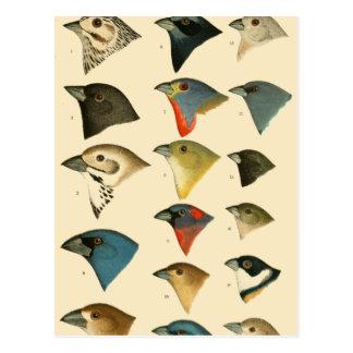 North American Birds Postcard