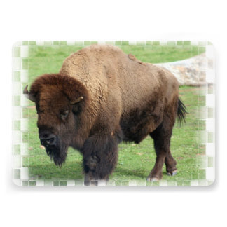 North American Bison Personalized Announcement