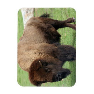 North American Bison Magnet Flexible Magnets