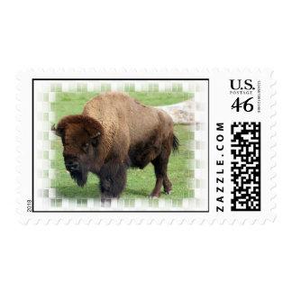 North American Bison Postage Stamp
