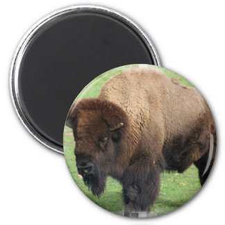 North American Bison Round Magnet Magnets