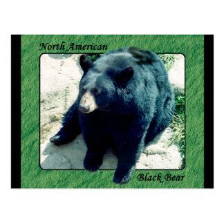North American Black Bear Postcard 2