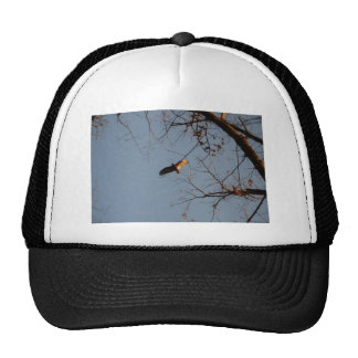 North American Buzzard coming home to roost Mesh Hats