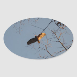 North American Buzzard coming home to roost Oval Sticker