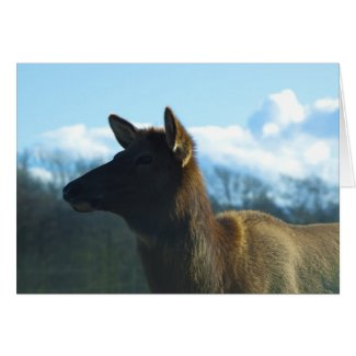 North American Elk card