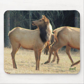 North American Elk Mouse Pad