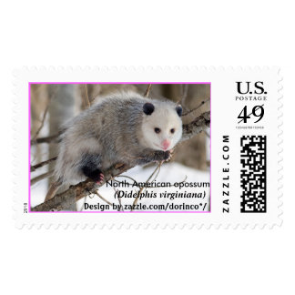 North American opossum (Didelphis virginiana) 1 Postage Stamps