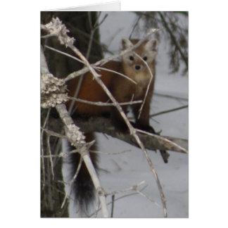 North American Pine Marten Card