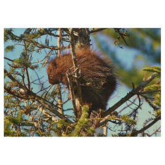 North American Porcupine Wood Poster