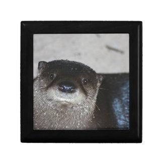 North American River Otter Jewelry Box
