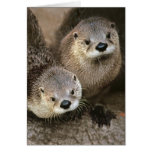 North American River Otters Greeting Card