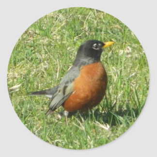 North American Robin Sticker