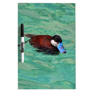 North American Ruddy Duck I Dry-Erase Board
