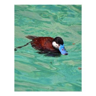 North American Ruddy Duck I Letterhead
