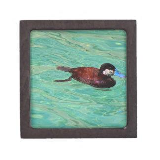 North American Ruddy Duck II Gift Box