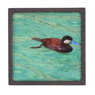 North American Ruddy Duck II Jewelry Box