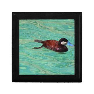 North American Ruddy Duck II Keepsake Box