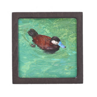 North American Ruddy Duck III Gift Box