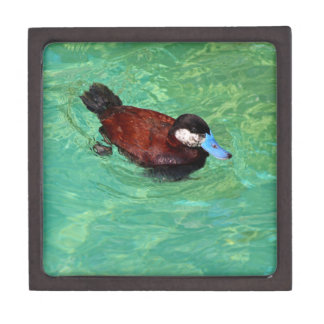 North American Ruddy Duck III Jewelry Box