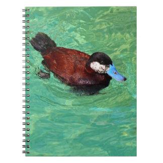 North American Ruddy Duck III Notebook