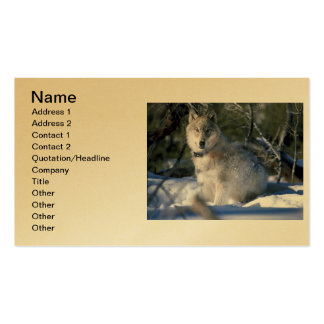 North American Timber Wolf in Snow Double-Sided Standard Business Cards (Pack Of 100)