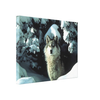 North American Timber Wolf in Snow Canvas Print